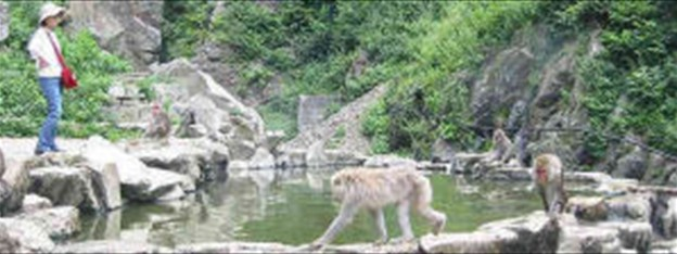 Make Videos from Internet Camera Sources - Snow Monkeys in Japan